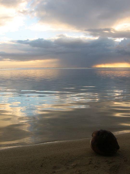 El coco on the beach - D'veedLuis_Studios