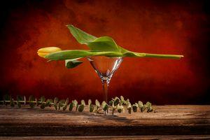 Still life of a closed yellow tulip