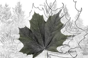Norway maple leaf art