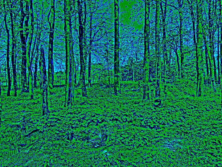 Local woodland - CHIEF GIFT KOFI AMU - LOGOTSE @TAAC