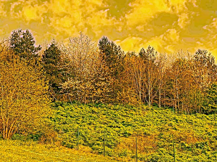 Kielder Forest - CHIEF GIFT KOFI AMU - LOGOTSE @TAAC
