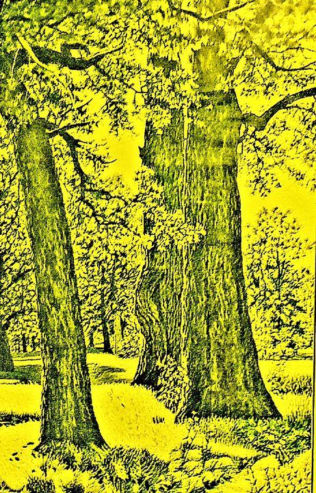 Protect the trees for our common goo - CHIEF GIFT KOFI AMU - LOGOTSE @TAAC