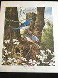 Bluebirds and Dogwood