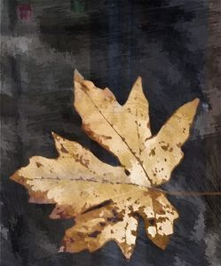 Single Golden Maple Leaf