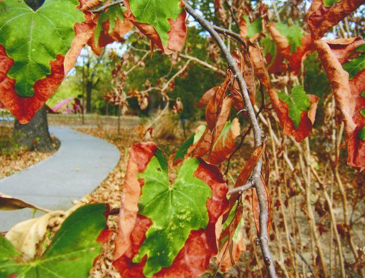 Fall - MelissaWorks