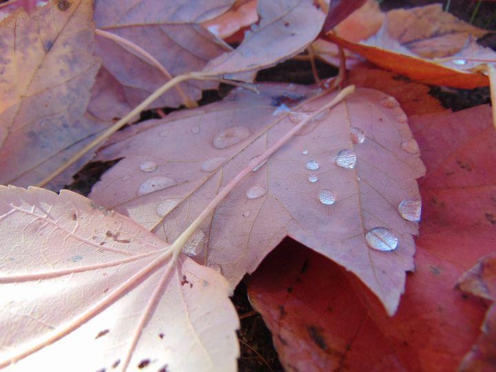 Fall Leaves - Rebeccas Dream