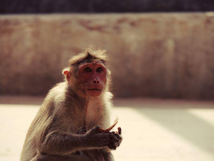 Portrait of a monkey - SK art