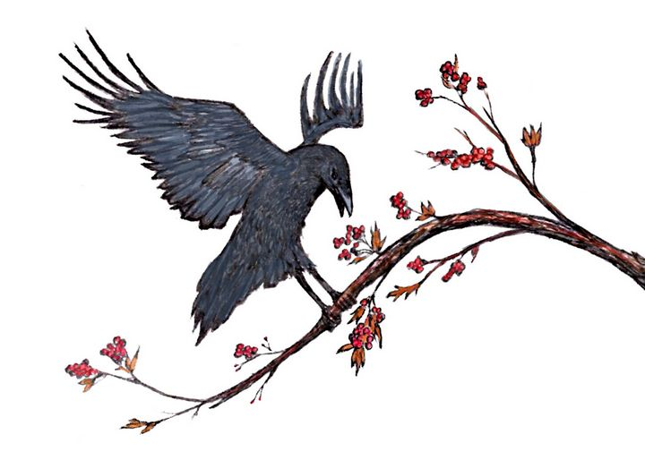 Raven Eating Berries - Gerard Dourado's Watercolours and Sketches