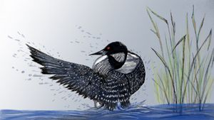 Loon ready for Flight - Gerard Dourado's Watercolours and Sketches
