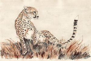 The Cheetah Queen