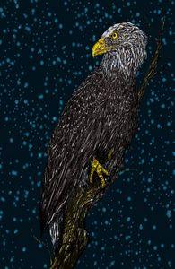 Eagle at Night