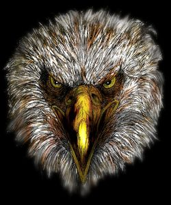 In the Eye of the Eagle