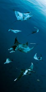 Rays on Rays - Gerard Dourado's Watercolours and Sketches