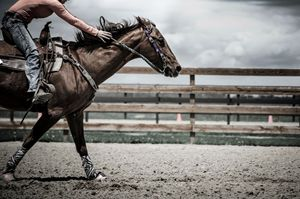 Galloping Horse Photography Print