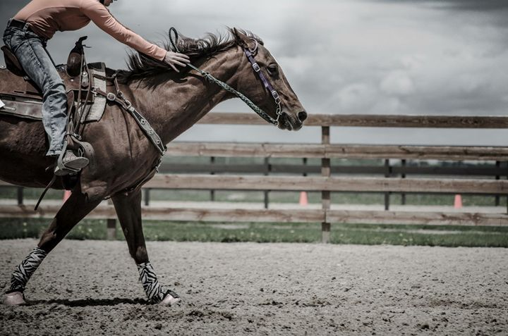 Galloping Horse Photography Print - Photo/Art Prints by Megan Wunderlin