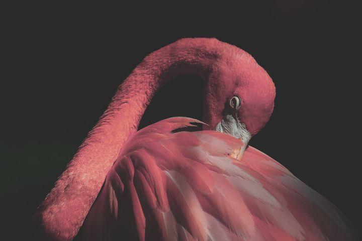 Pastel Pink Flamingo Photo Print - Photo/Art Prints by Megan Wunderlin