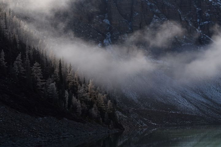 Frozen Trees - Dog Traynor