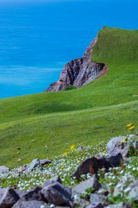 Flowery cliff
