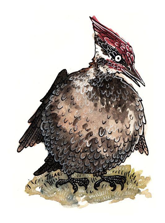 The Fat Woodpecker - Wonderland