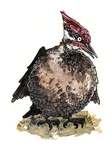 The Fat Woodpecker
