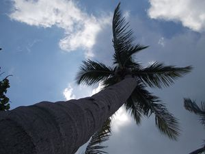 A Palm Tree And Sky