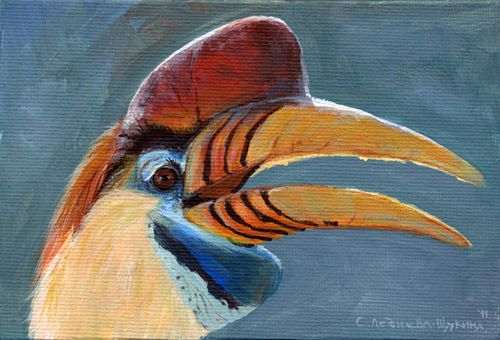 Sulawesi Red-Knobbed Hornbill Aq030 - schubukin
