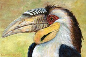 Wreathed Hornbill Aq033
