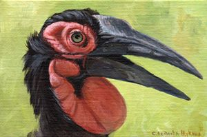 Southern Ground Hornbill Aq032