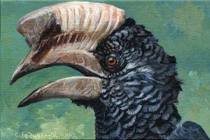 Sylvery Cheeked Hornbill Aq031
