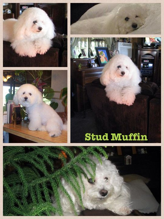 Stud Muffin - Photography By SusanInce