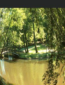 The bridge in the grove