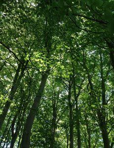 Among the tree tops