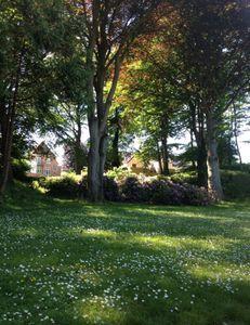 Romantic lawn