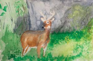 Big Buck of Shenandoah National Park