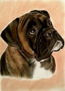 Boxer Dog - Pet Portraits for Charity