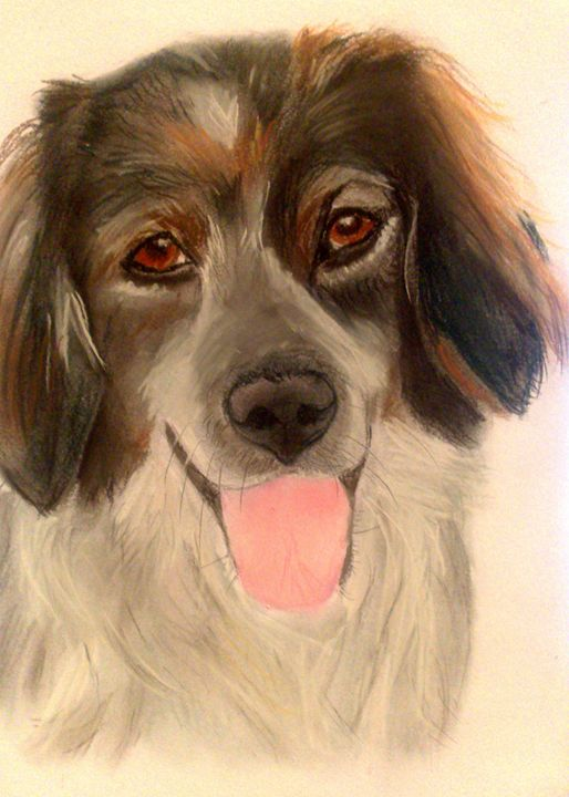 CoCo - Pet Portraits for Charity