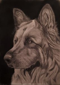 Domino - Pet Portraits for Charity