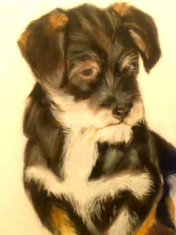 Candy - Pet Portraits for Charity