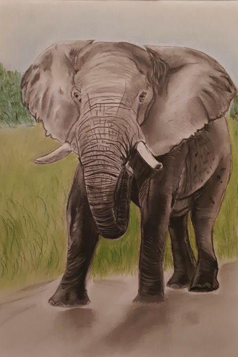 Elephant in Pastels - SOLD - Pet Portraits for Charity