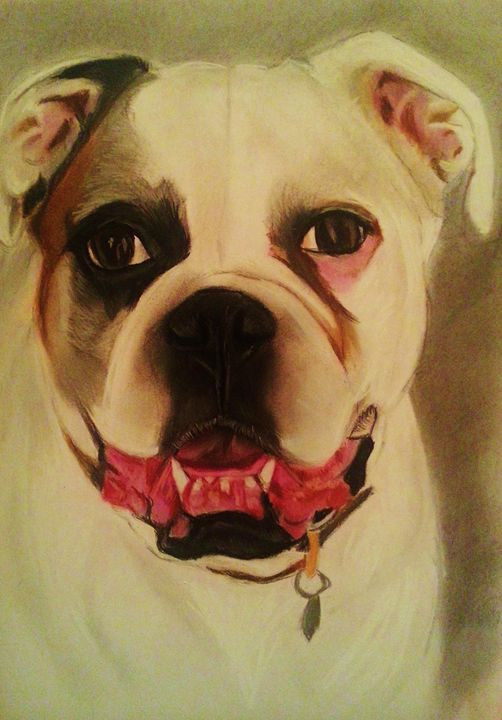 Sox - Pet Portraits for Charity