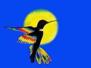 colibri contra el sol