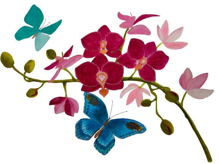 Orquideas y mariposas - ChicaLatina