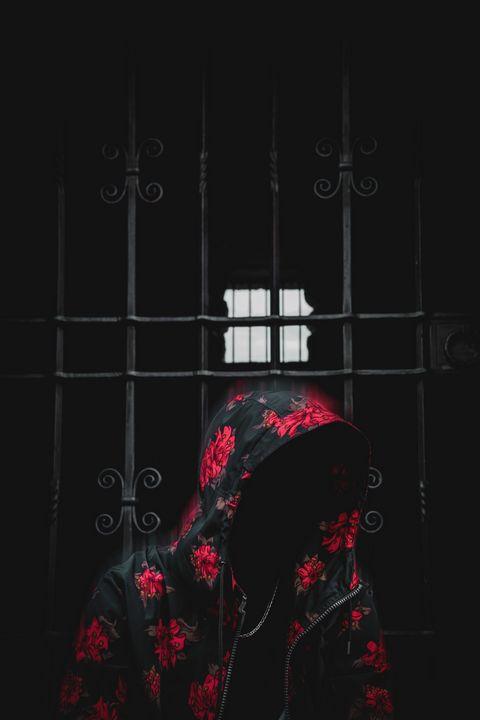 Mystery rose - AdamVisuals