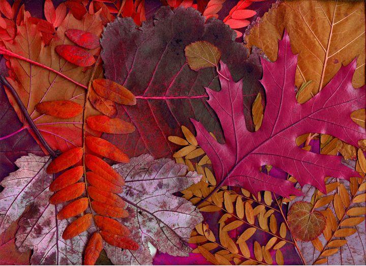Plant Trees Rake Leaves - Clinton Michael