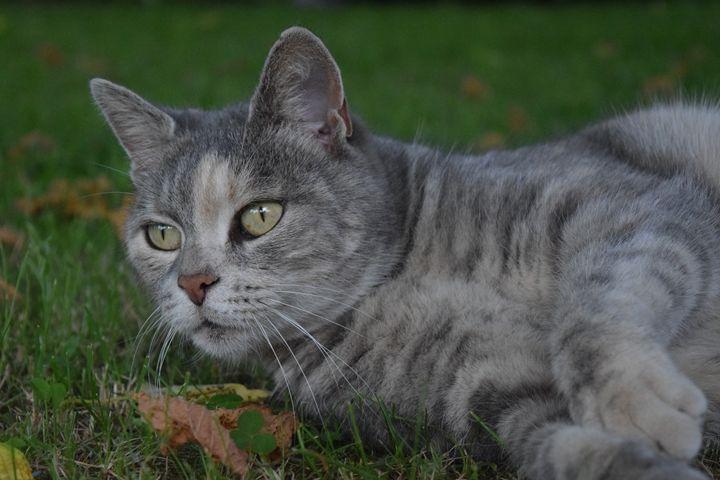 Cat's curiosity - Croquet