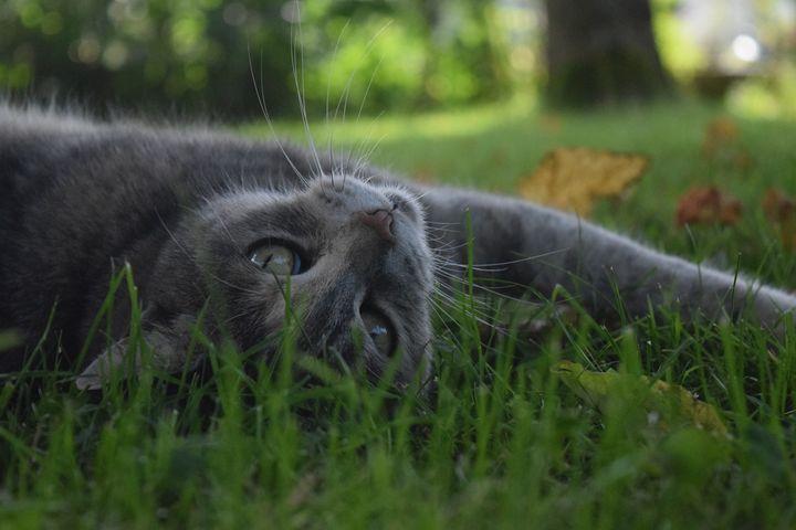 Cat's look - Croquet
