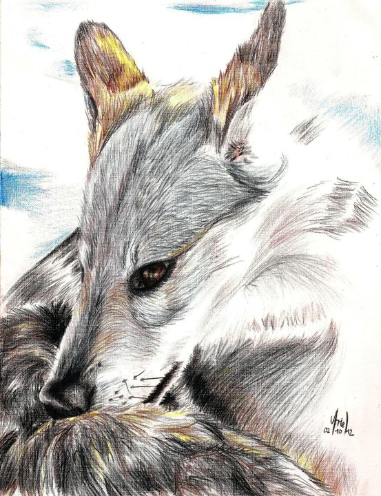 A wolf - Lozadarte