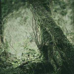 Tree with a twist.