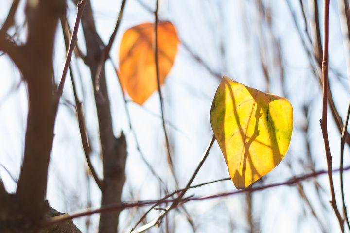 Love leafs - linn memran