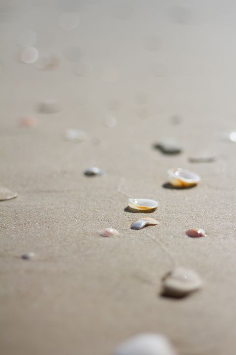 Sand shells on the beach - linn memran